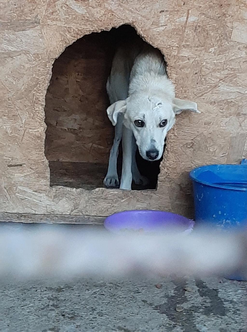 Yoda-mâle- fourrière de Târgu Frumos - Sera en famille d'accueil dans le 25 en décembre Yoda_110