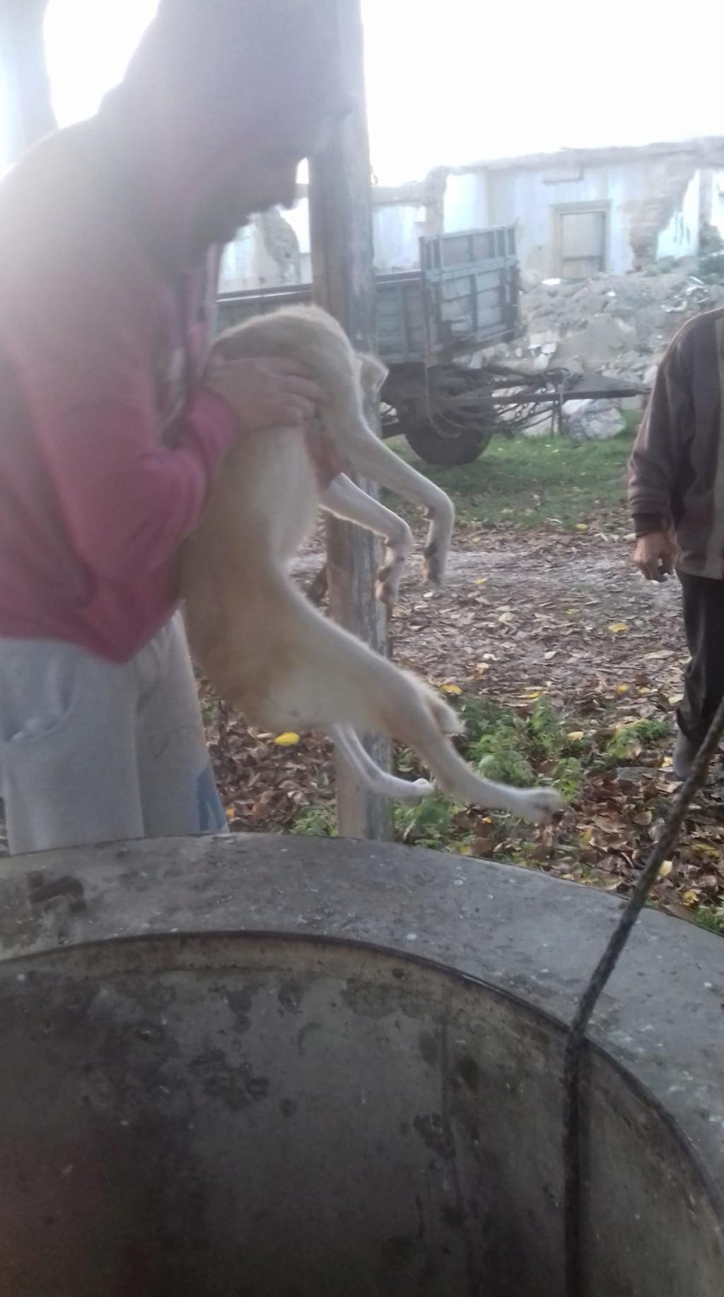 Yoda-mâle- fourrière de Târgu Frumos - Sera en famille d'accueil dans le 25 en décembre Yoda_111