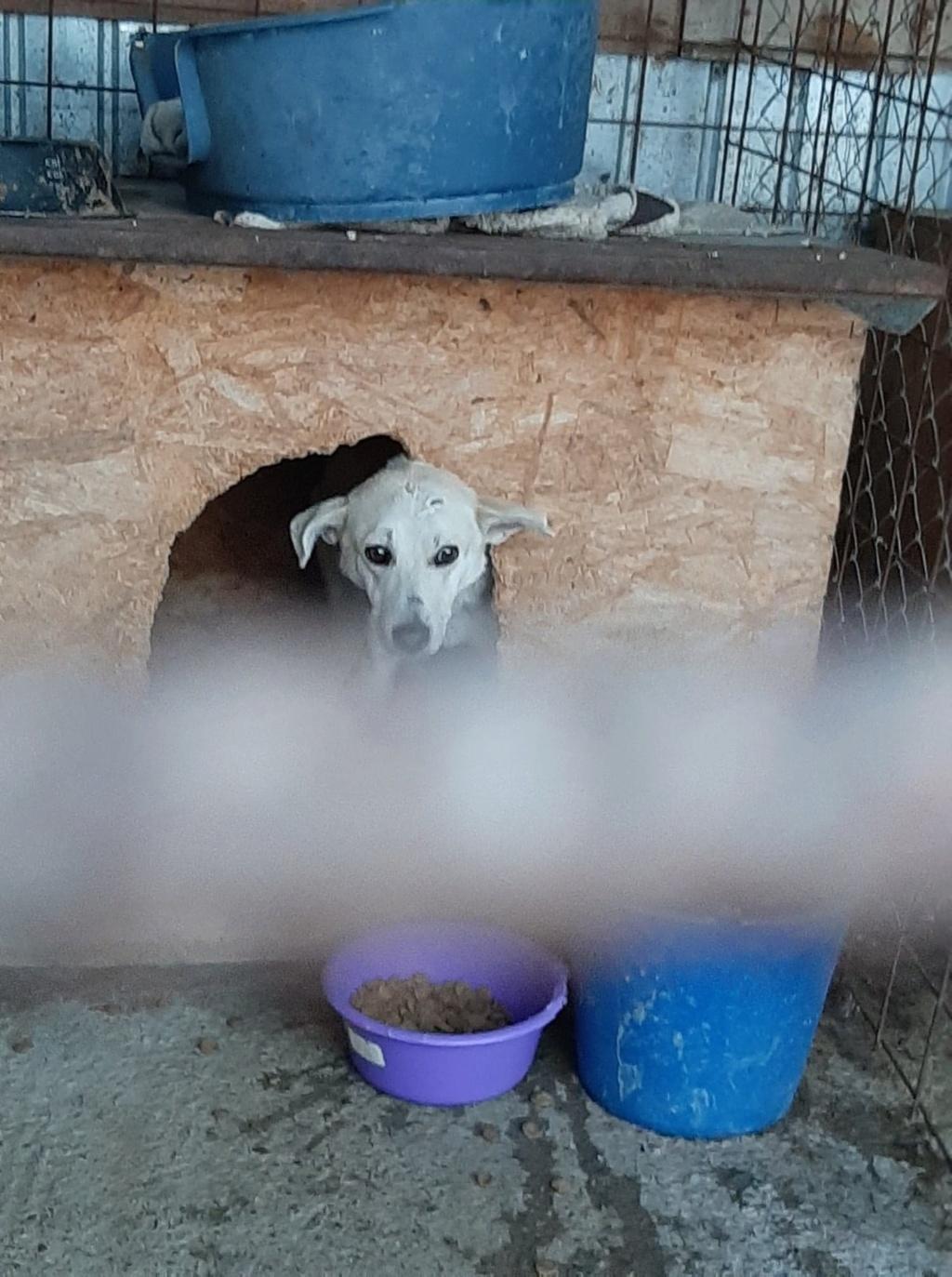 Yoda-mâle- fourrière de Târgu Frumos - Sera en famille d'accueil dans le 25 en décembre Yoda_112