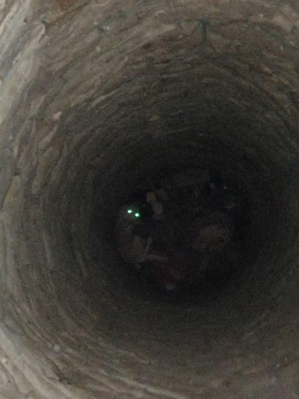 Yoda-mâle- fourrière de Târgu Frumos - Sera en famille d'accueil dans le 25 en décembre Yoda_117