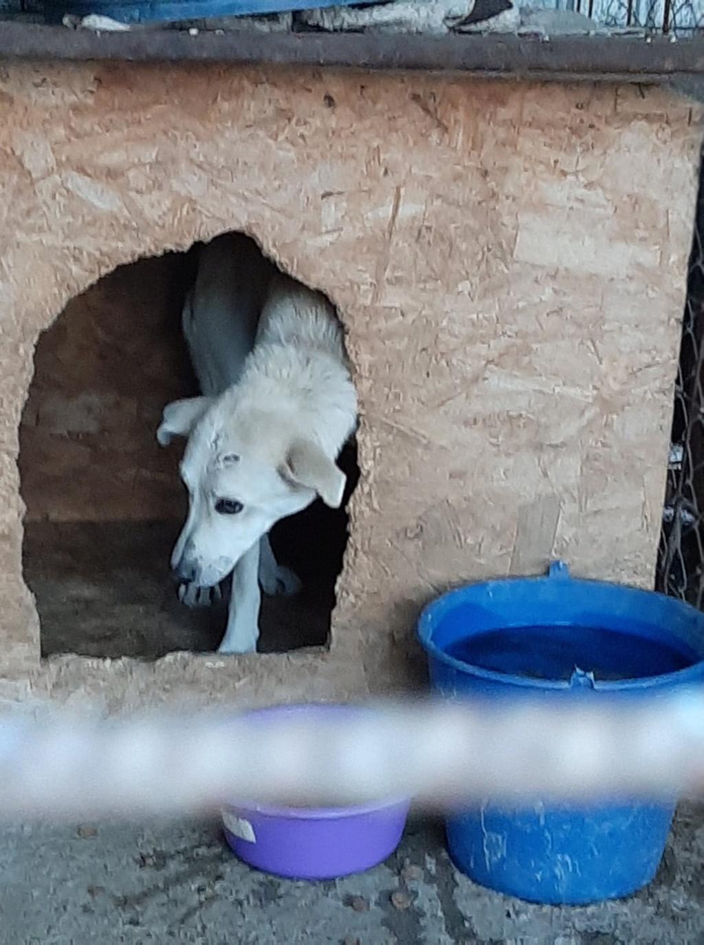 Yoda-mâle- fourrière de Târgu Frumos - Sera en famille d'accueil dans le 25 en décembre Yoda_510