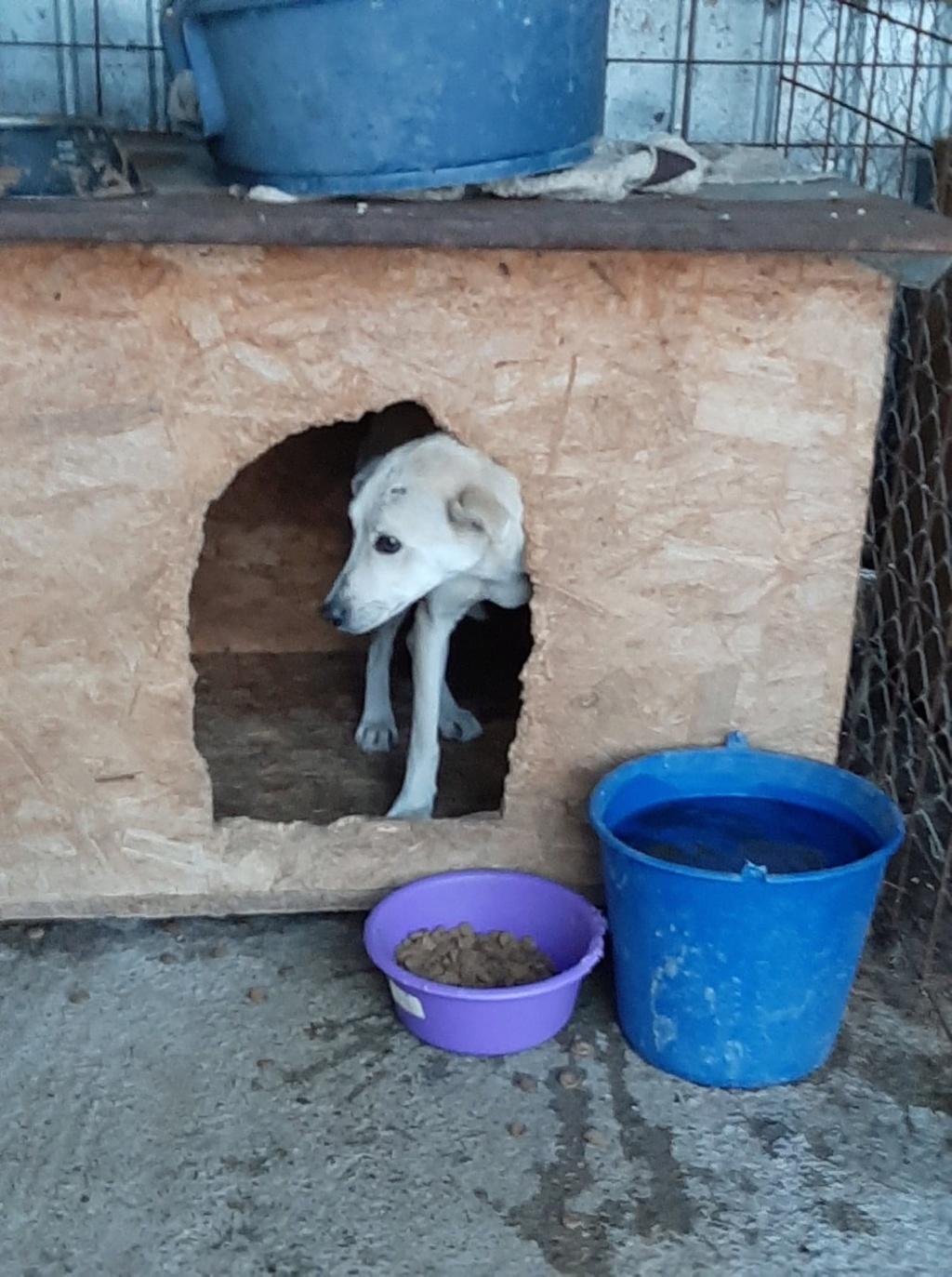 Yoda-mâle- fourrière de Târgu Frumos - Sera en famille d'accueil dans le 25 en décembre Yoda_610
