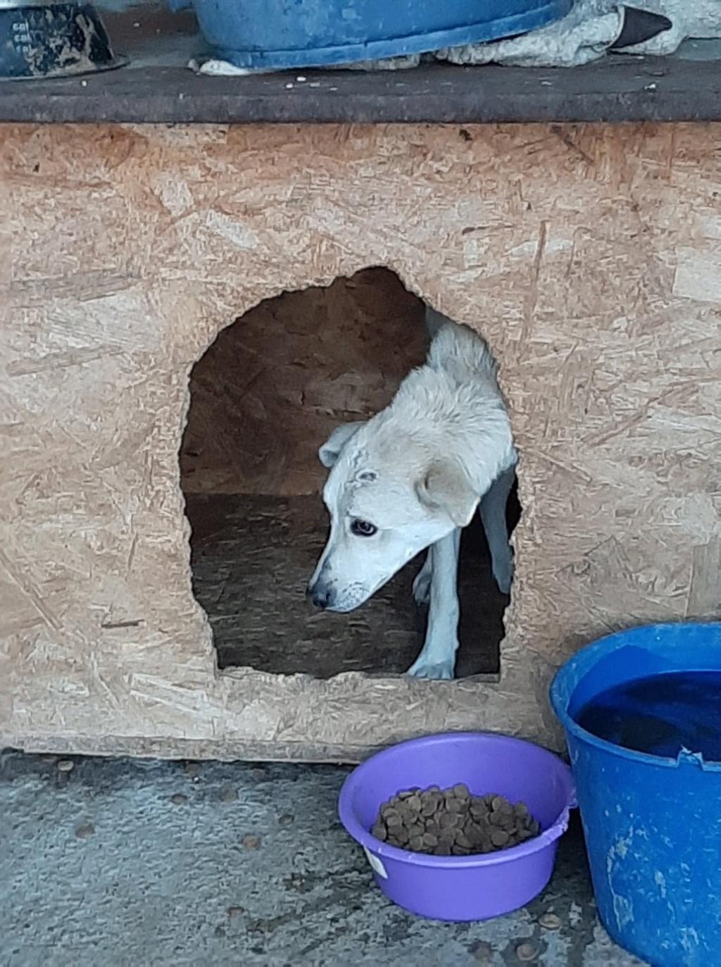 Yoda-mâle- fourrière de Târgu Frumos - Sera en famille d'accueil dans le 25 en décembre Yoda_710