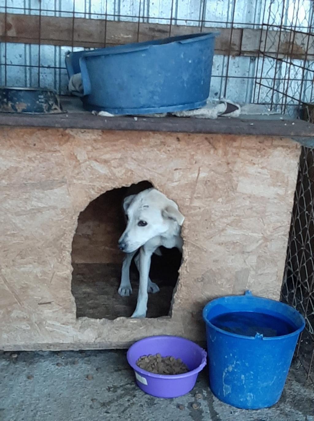 Yoda-mâle- fourrière de Târgu Frumos - Sera en famille d'accueil dans le 25 en décembre Yoda_810