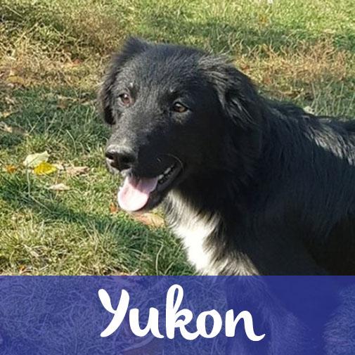 YukonM