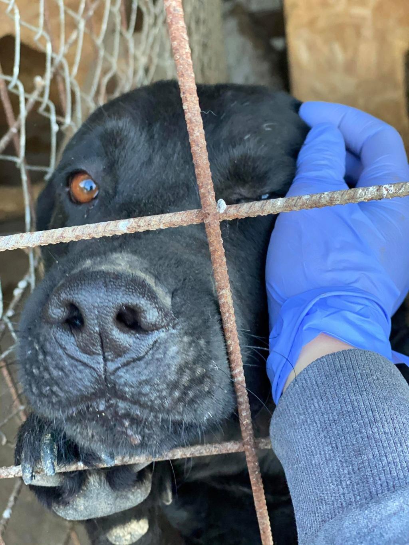 Yéti- mâle- fourrière de Târgu Frumos - adopté via Andreea Yzoti_10