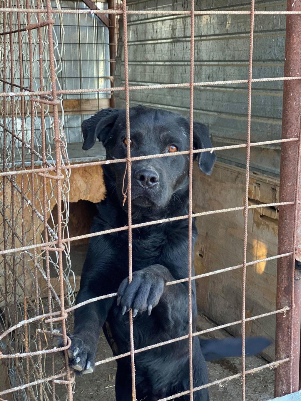 Yéti- mâle- fourrière de Târgu Frumos - adopté via Andreea Yzoti_21