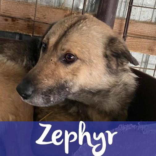 ZephyrM