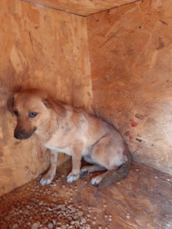 Zintia- femelle-fourrière de Târgu Frumos - Adoptée via Andreea Zintia10