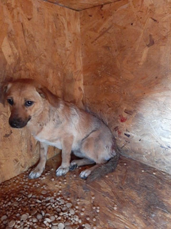 Zintia- femelle-fourrière de Târgu Frumos - Adoptée via Andreea Zintia11