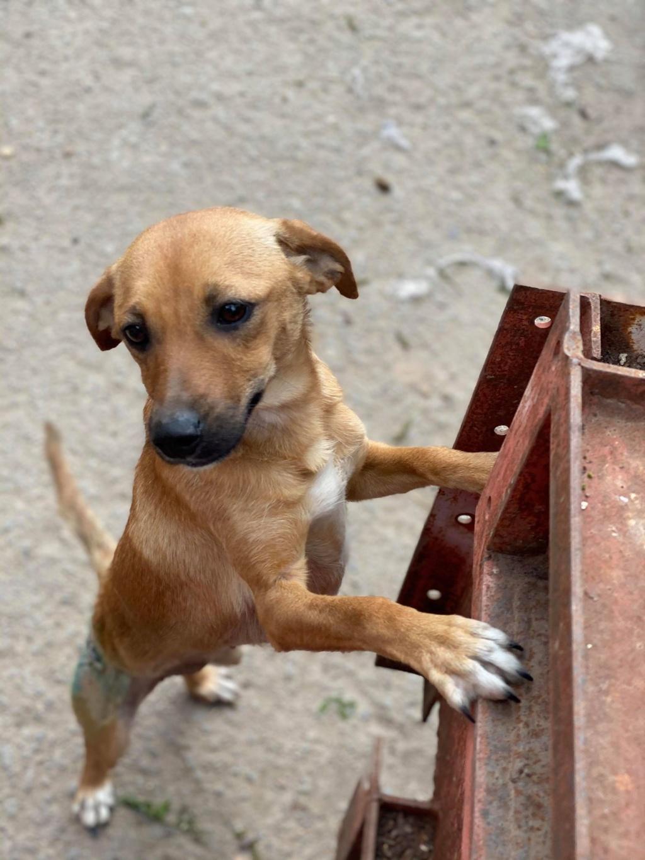 Zintia- femelle-fourrière de Târgu Frumos - Adoptée via Andreea Zintia13