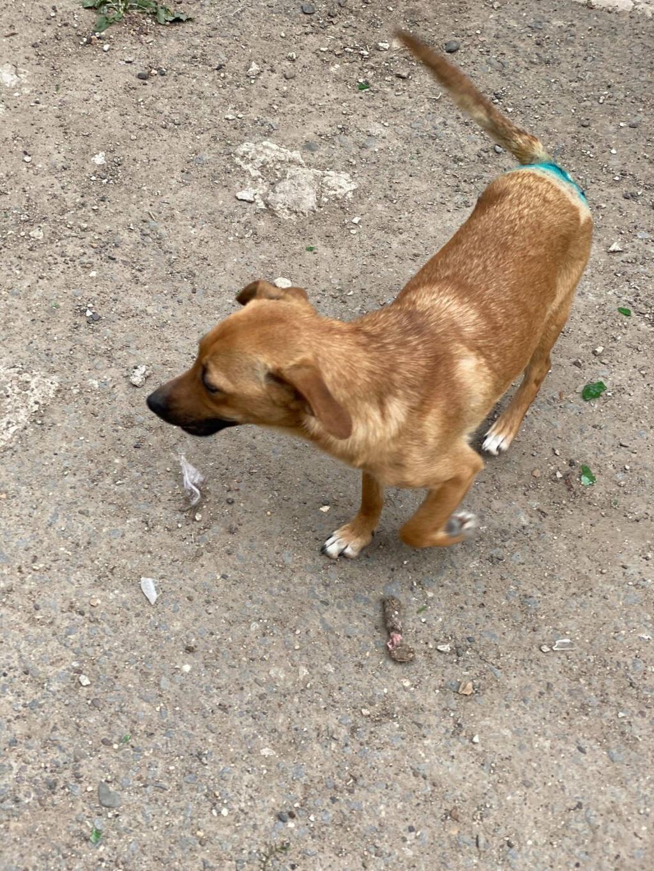 Zintia- femelle-fourrière de Târgu Frumos - Adoptée via Andreea Zintia15