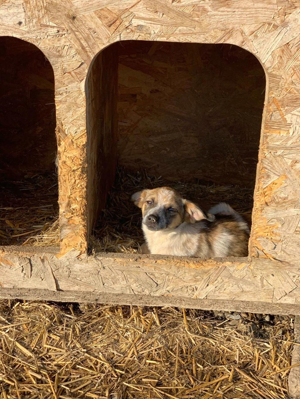 Zita- femelle- fourrière de Târgu Frumos - adoptée via Andreea Zita_e22