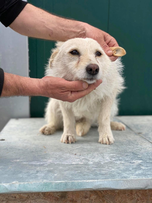 Zoom -femelle- fourrière de Târgu Frumos - fugue en Roumanie Zoom_110