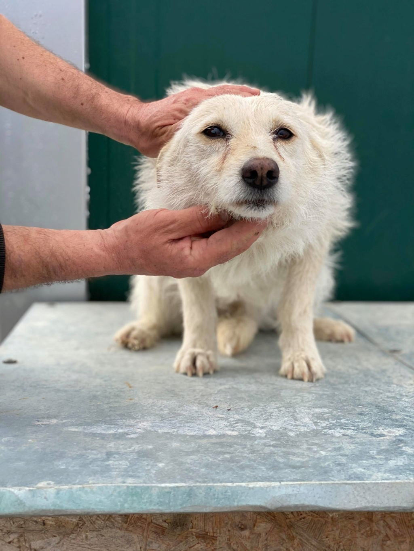 Zoom -femelle- fourrière de Târgu Frumos - fugue en Roumanie Zoom_111