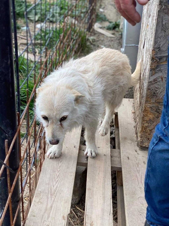 Zoom -femelle- fourrière de Târgu Frumos - fugue en Roumanie Zoom_113