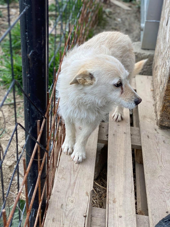 Zoom -femelle- fourrière de Târgu Frumos - fugue en Roumanie Zoom_710