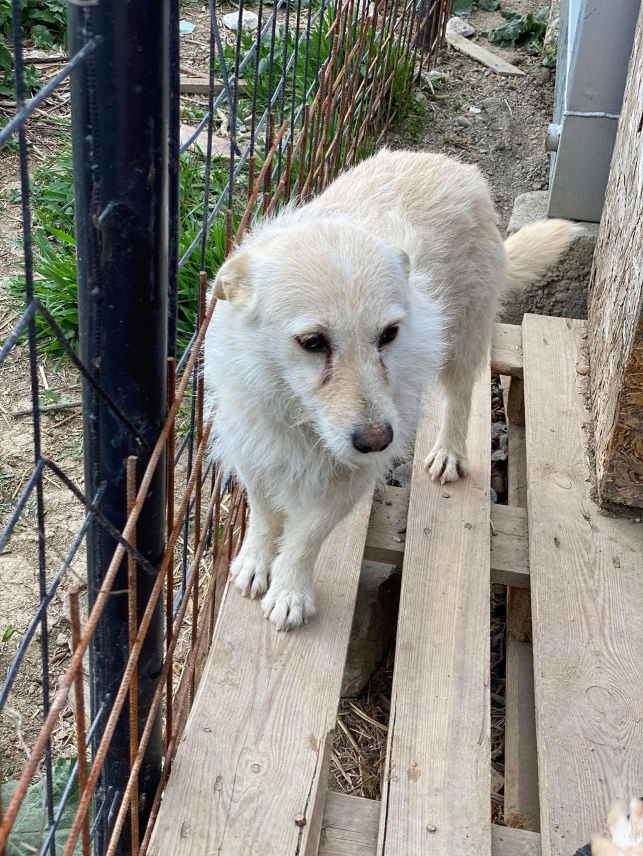 Zoom -femelle- fourrière de Târgu Frumos - fugue en Roumanie Zoom_810