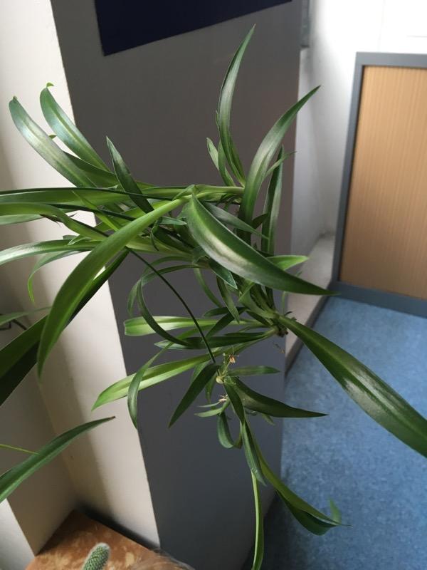 Quelle est cette plante? 0f488a10