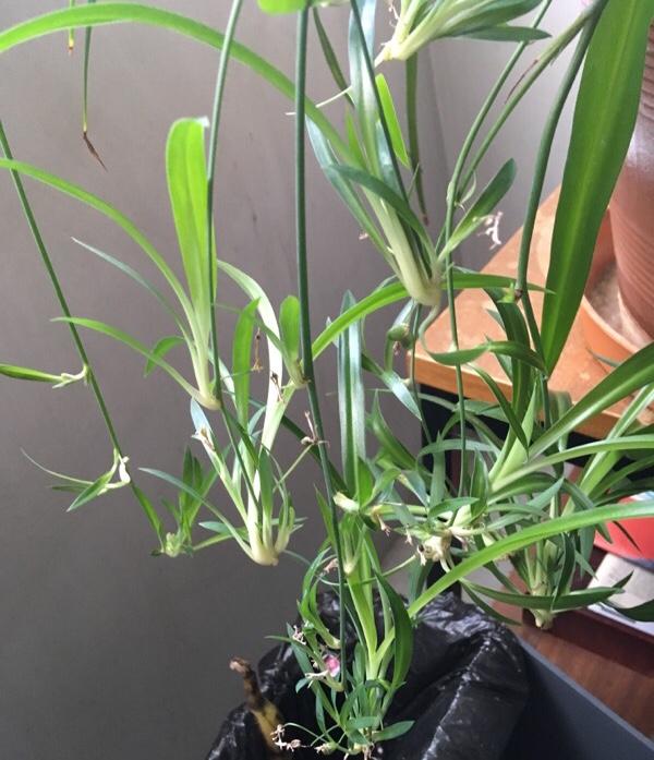 Quelle est cette plante? E9b36110