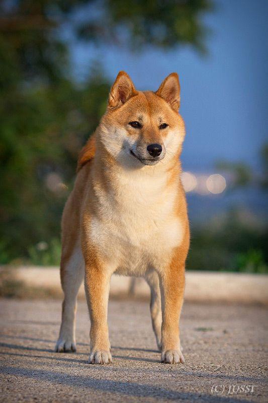 Вес щенка - Страница 12 C0886910