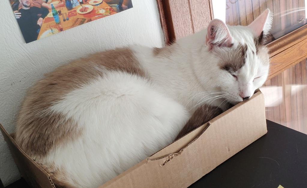 ATREYOU Cat10