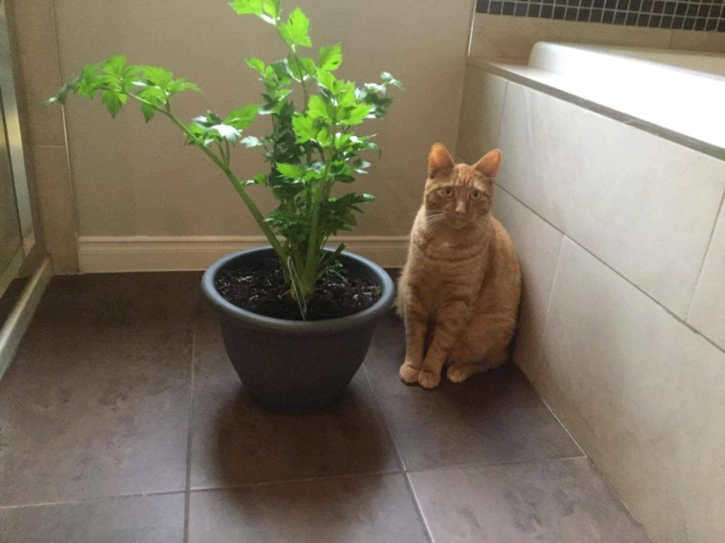 Qui fouille dans les plantes ? 16e80f10