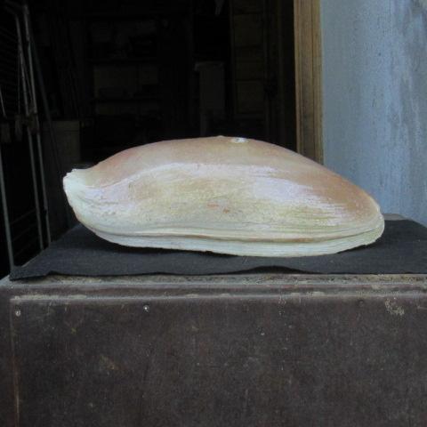 gastéropodes du Sénégal Img_2221