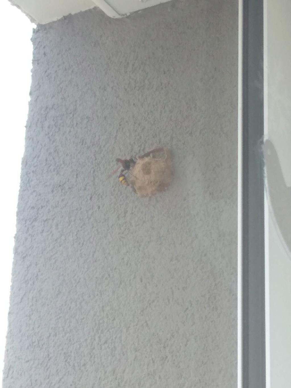 Nid ? Bordure fenêtre béton appartement extérieure Img_2011