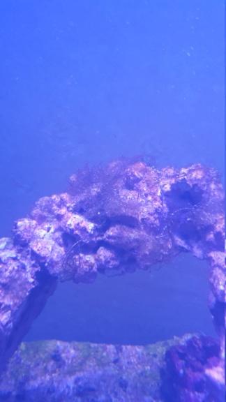 Aquatlantis fusion de 120x50x70 de jossdiz 20200313