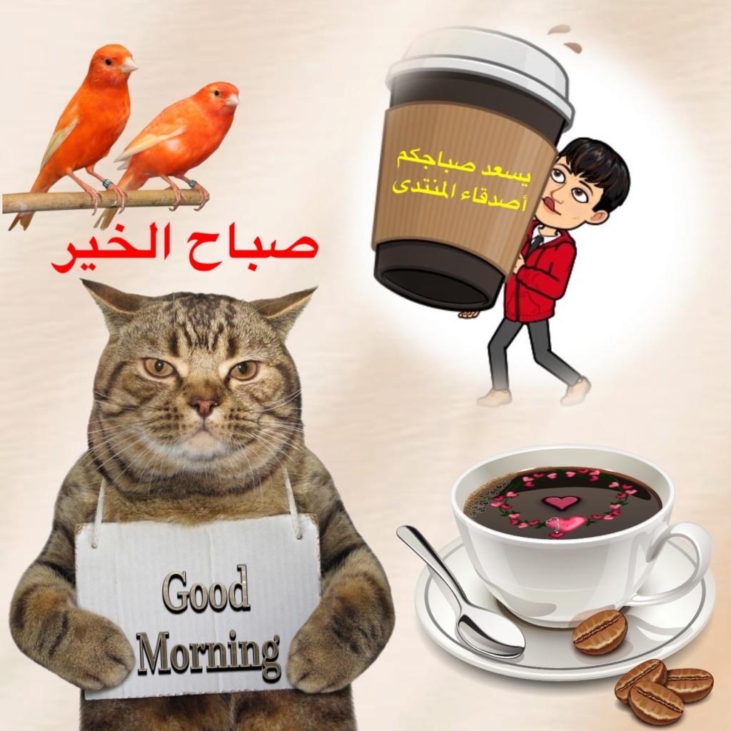 جلسة مسائية مع فنجان قهوة بنكهة الحروف =   لعشاق القهوة و الخواطر = زهرة اللوتس المقدسية  Img_8323