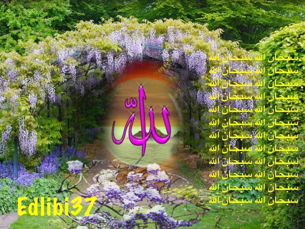 تعالو نسجل الحضور اليومي بكلمة في حب الله عز  وجل - صفحة 13 Img_8417