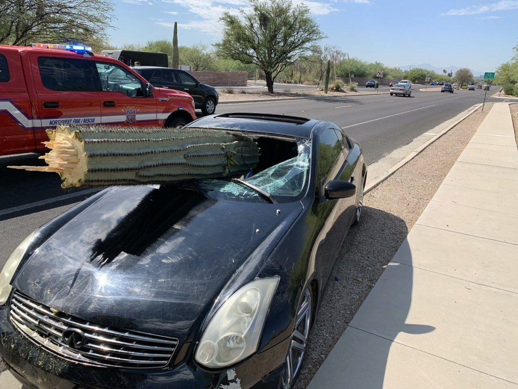 Cactus accident 5d262010