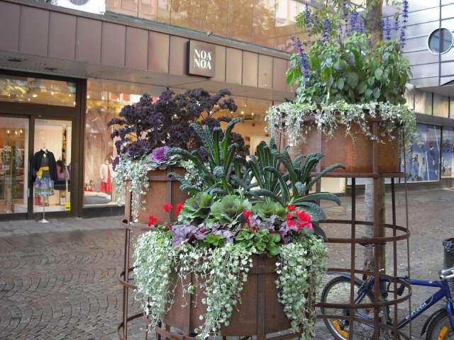 Quelques jardinnières suédoises. Cimg0010
