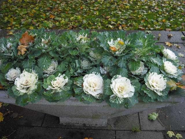 Quelques jardinnières suédoises. Cimg0011