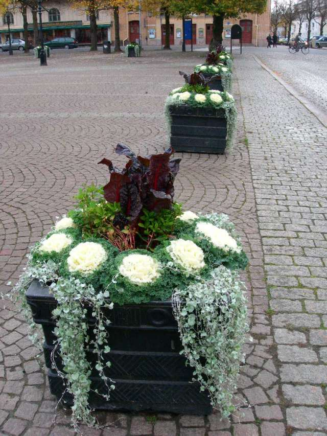 Quelques jardinnières suédoises. Dscn3010