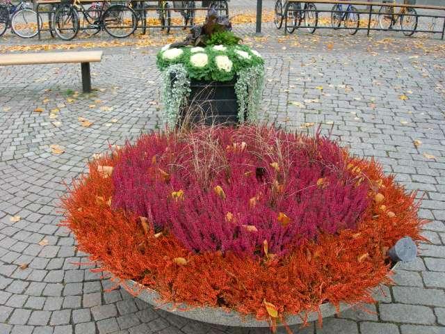 Quelques jardinnières suédoises. Dscn3011