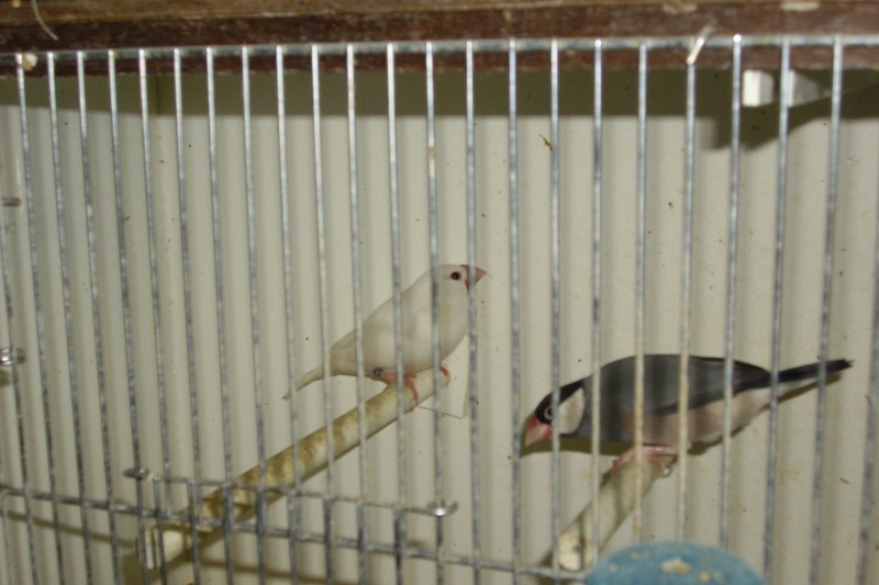 Ma femelle a pondu Img_0136