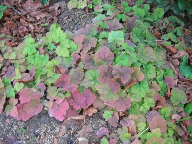 Quelques plantes du jardin Dscn8410