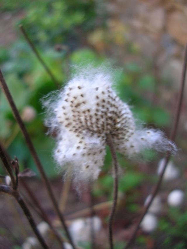 Quelques plantes du jardin Dscn8414