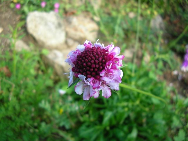 Quelques plantes du jardin Dscn8415