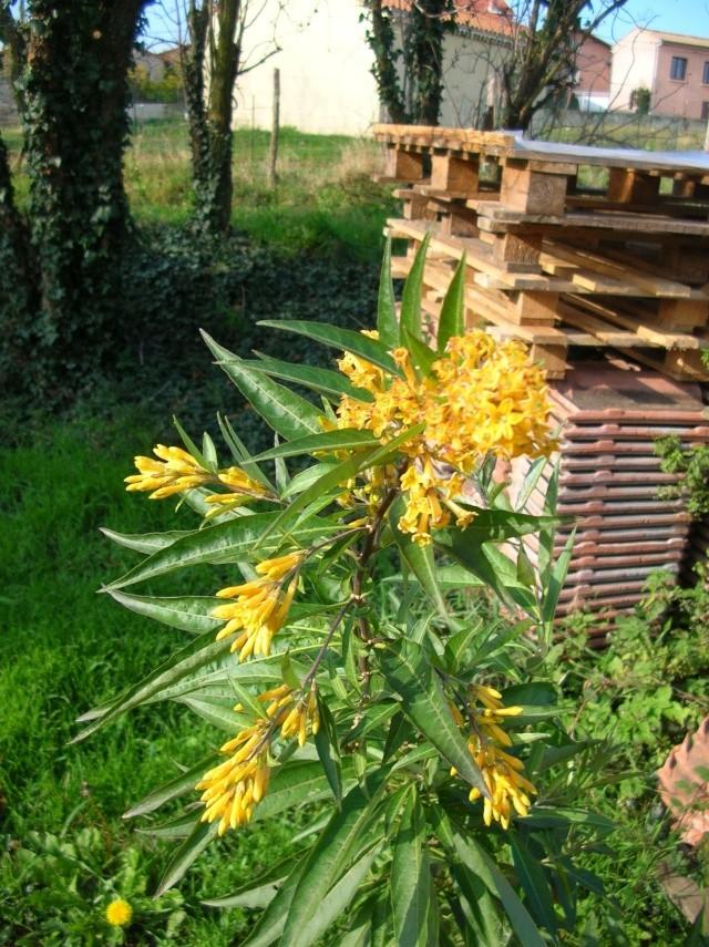 Quelques plantes du jardin Dscn8416