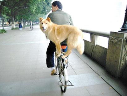 Comment transporter son chien sur son B? - Page 2 95121510