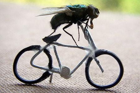 Brommie et psychanalyse Flybik10