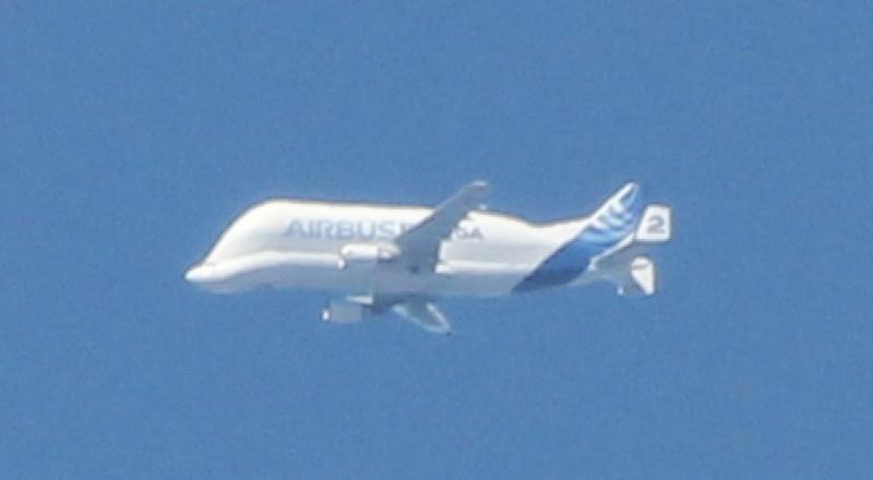 J'ai vu Zorro et un beluga volant Beluga13