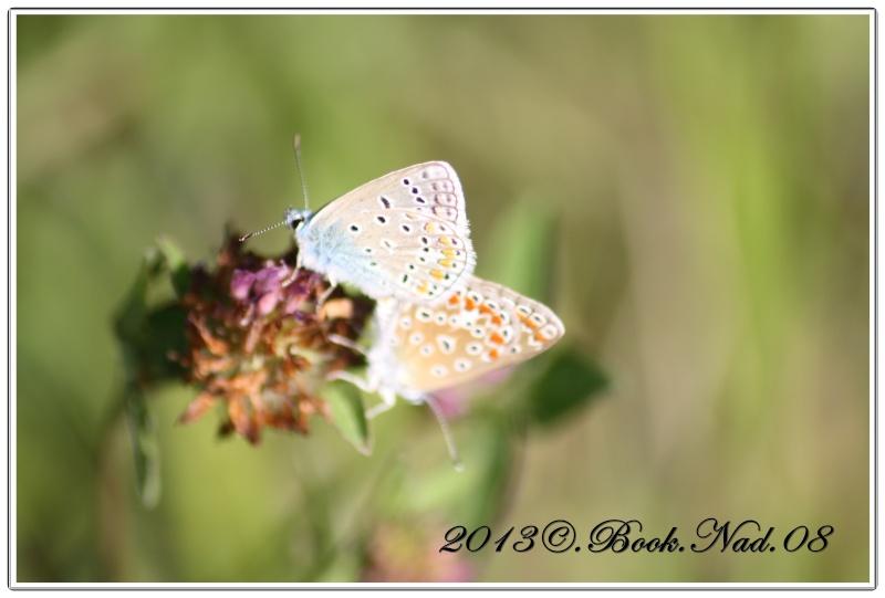 Les papillons. - Page 3 Cadre114