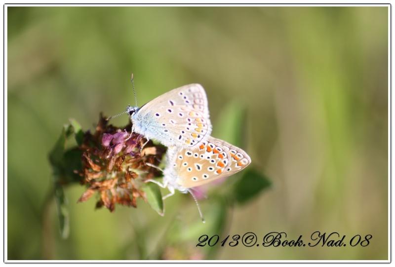 Les papillons. - Page 3 Cadre115