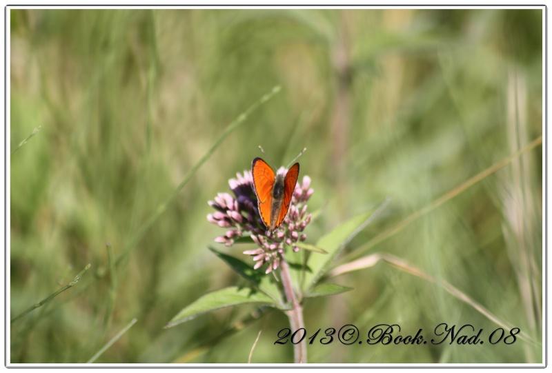 Les papillons. - Page 3 Cadre116