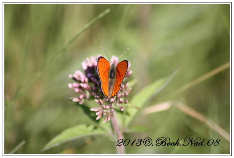 Les papillons. - Page 3 Cadre117