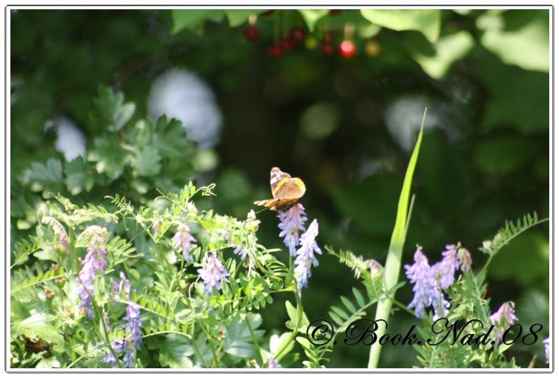 Les papillons. - Page 3 Cadrer10